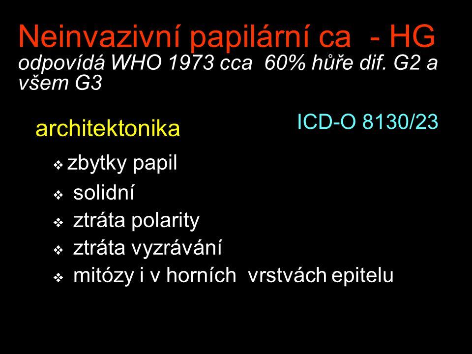 Neinvazivní papilární ca - HG odpovídá WHO 1973 cca 60% hůře dif. G2 a všem G3 architektonika  zbytky papil  solidní  ztráta polarity  ztráta vyzr