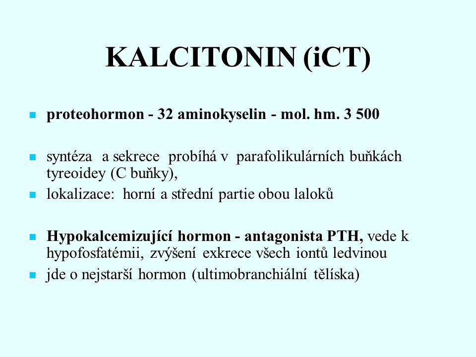KALCITONIN (iCT) proteohormon - 32 aminokyselin - mol. hm. 3 500 proteohormon - 32 aminokyselin - mol. hm. 3 500 syntéza a sekrece probíhá v parafolik