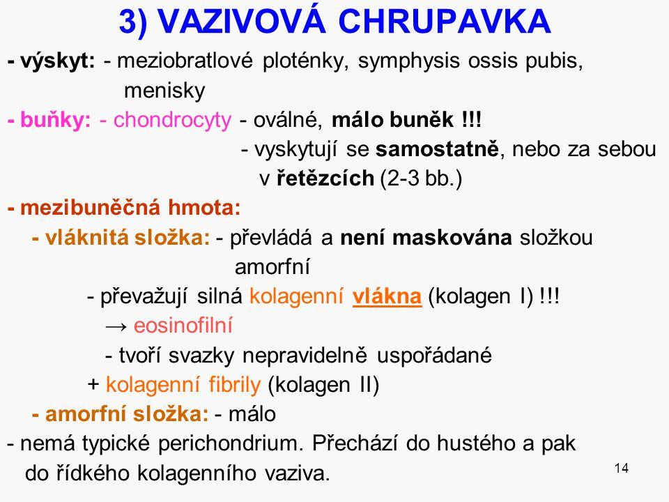 14 3) VAZIVOVÁ CHRUPAVKA - výskyt: - meziobratlové ploténky, symphysis ossis pubis, menisky - buňky: - chondrocyty - oválné, málo buněk !!! - vyskytuj