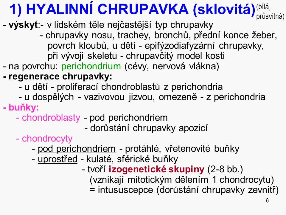 6 1) HYALINNÍ CHRUPAVKA (sklovitá) - výskyt:- v lidském těle nejčastější typ chrupavky - chrupavky nosu, trachey, bronchů, přední konce žeber, povrch