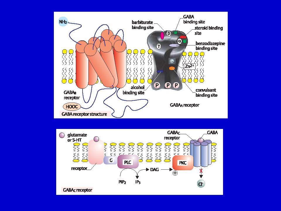Neuroaktivní peptidy opioidy neurohypofyzeální peptidy tachykininy rodina sekretinu inzulínová rodina rodina somatostatinu rodina gastrinu