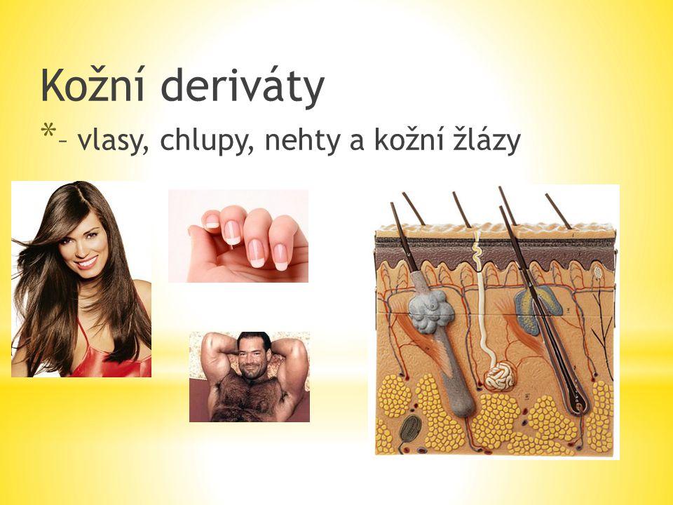 Kožní deriváty * – vlasy, chlupy, nehty a kožní žlázy