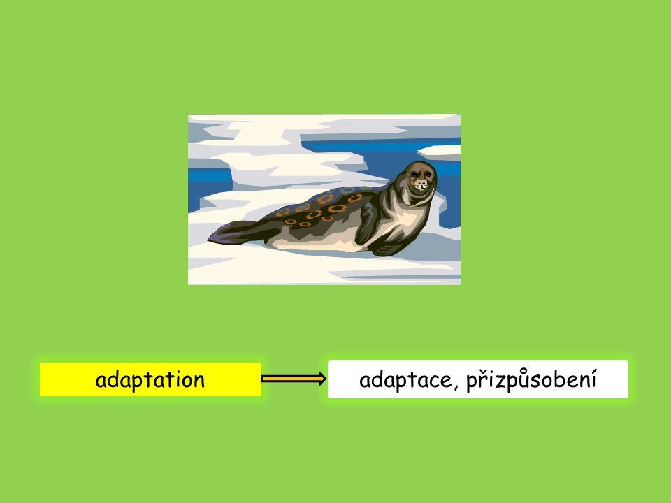 adaptation adaptace, přizpůsobení
