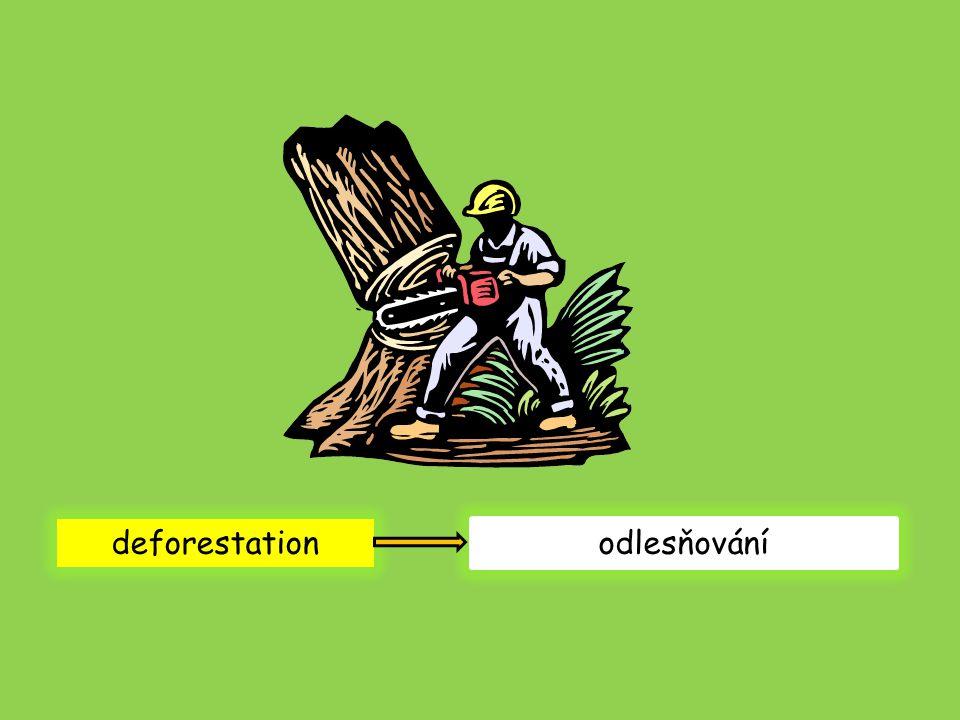 deforestation odlesňování