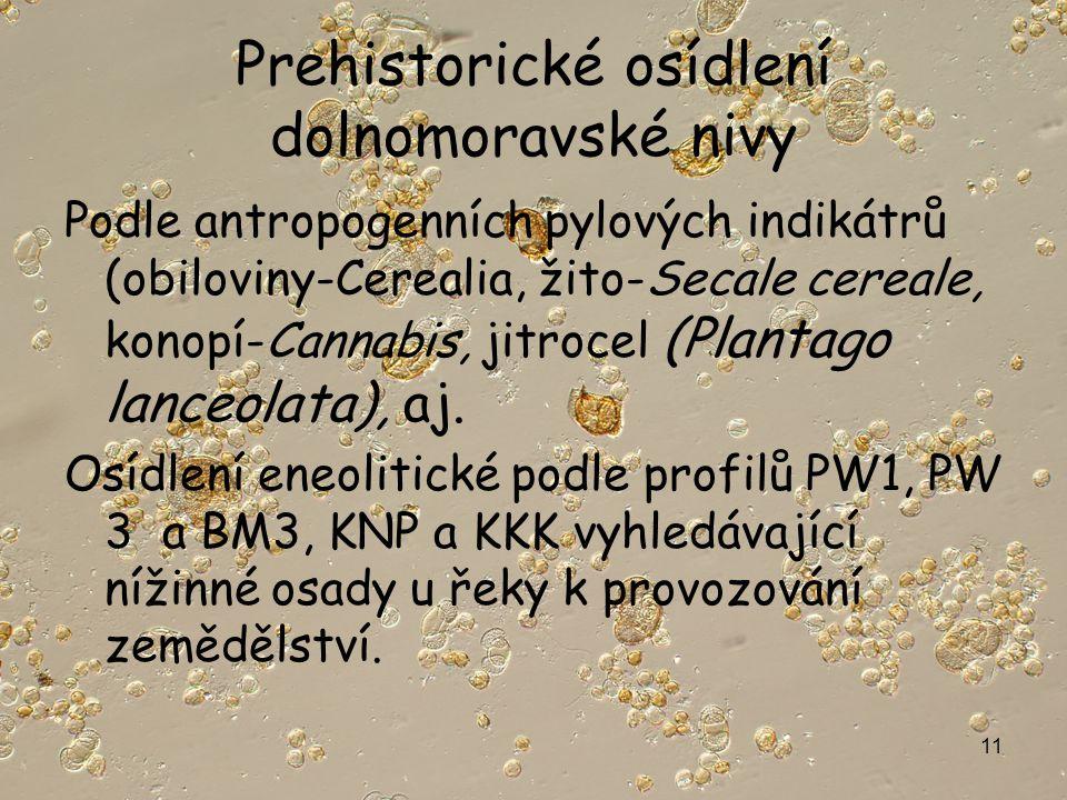 11 Prehistorické osídlení dolnomoravské nivy Podle antropogenních pylových indikátrů (obiloviny-Cerealia, žito-Secale cereale, konopí-Cannabis, jitrocel (Plantago lanceolata), aj.
