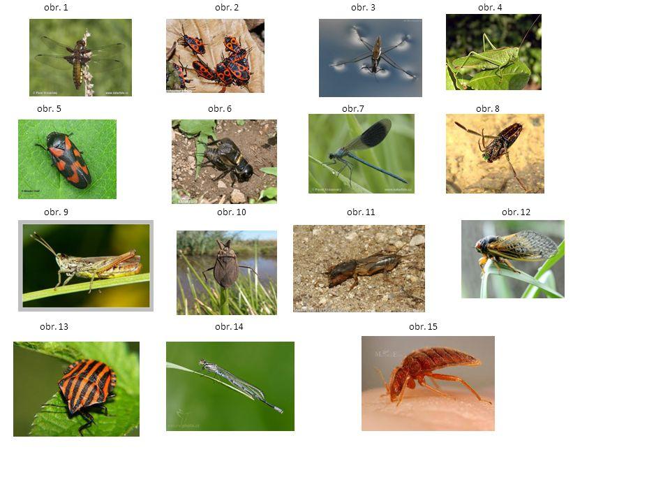 Úkol: Žáci přiřadí zástupce hmyzu (2.) ke správnému řádu (1.) a k odpovídajícímu obrázku (3.) Příklad: řád rovnokřídlí - cvrček polní – obr.6 Cíle: umět spojit pojmy se zástupci hmyzu, poznat druhy hmyzu.