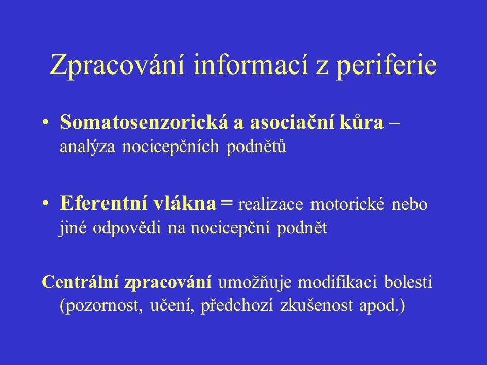 Zpracování informací z periferie Somatosenzorická a asociační kůra – analýza nocicepčních podnětů Eferentní vlákna = realizace motorické nebo jiné odpovědi na nocicepční podnět Centrální zpracování umožňuje modifikaci bolesti (pozornost, učení, předchozí zkušenost apod.)