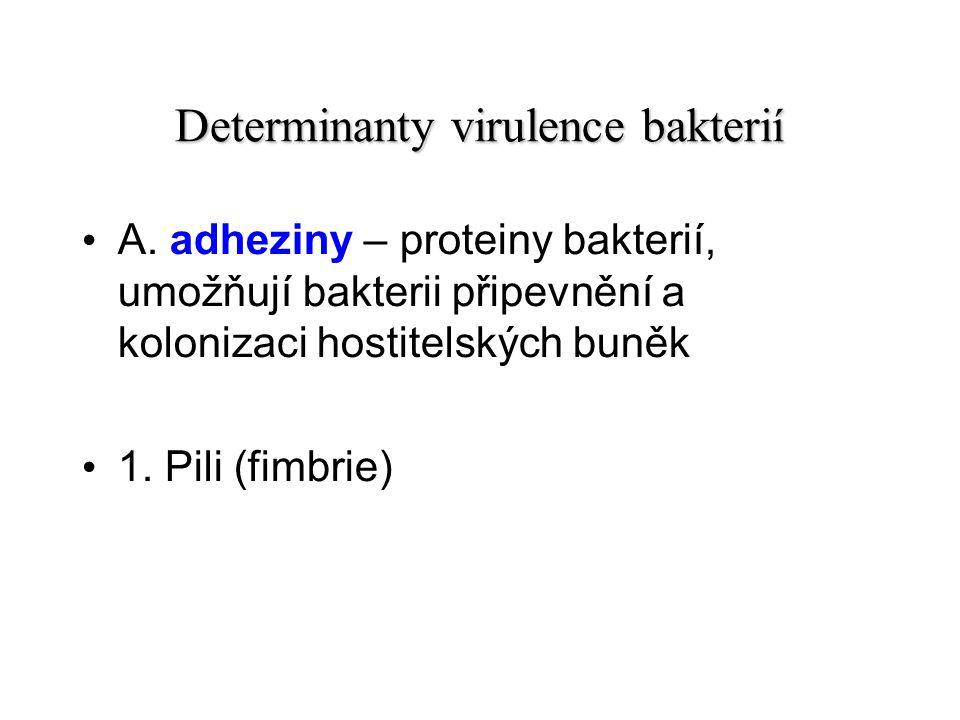 Determinanty virulence bakterií A.