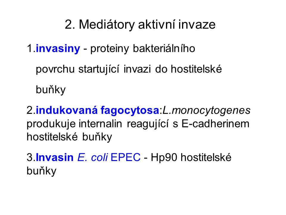 2. Mediátory aktivní invaze 1.invasiny - proteiny bakteriálního povrchu startující invazi do hostitelské buňky 2.indukovaná fagocytosa:L.monocytogenes
