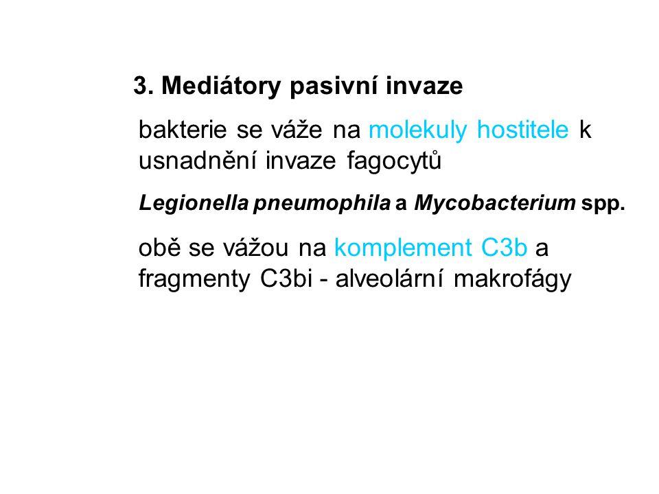 3. Mediátory pasivní invaze bakterie se váže na molekuly hostitele k usnadnění invaze fagocytů Legionella pneumophila a Mycobacterium spp. obě se vážo