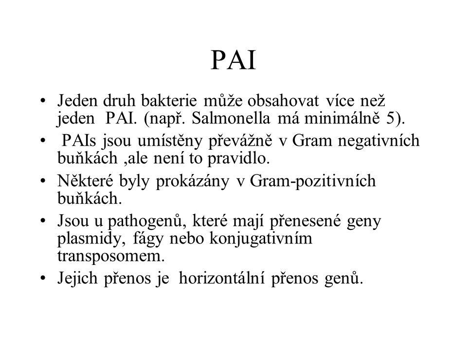 PAI Jeden druh bakterie může obsahovat více než jeden PAI.