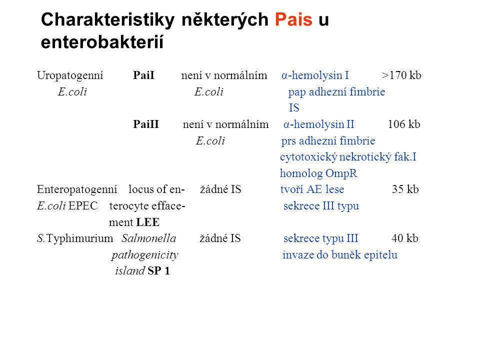 Charakteristiky některých Pais u enterobakterií Uropatogenní PaiI není v normálním α-hemolysin I >170 kb E.coli E.coli pap adhezní fimbrie IS PaiII není v normálním α-hemolysin II 106 kb E.coli prs adhezní fimbrie cytotoxický nekrotický fak.I homolog OmpR Enteropatogenní locus of en- žádné IS tvoří AE lese 35 kb E.coli EPEC terocyte efface- sekrece III typu ment LEE S.Typhimurium Salmonella žádné IS sekrece typu III 40 kb pathogenicity invaze do buněk epitelu island SP 1
