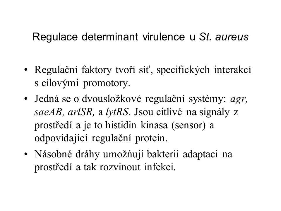 Regulace determinant virulence u St.