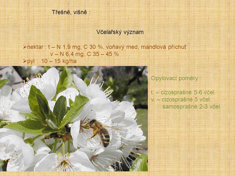 Třešně, višně : Včelařský význam  nektar : t – N 1,9 mg, C 30 %, voňavý med, mandlová příchuť v – N 6,4 mg, C 35 – 45 %  pyl : 10 – 15 kg/ha Opylova