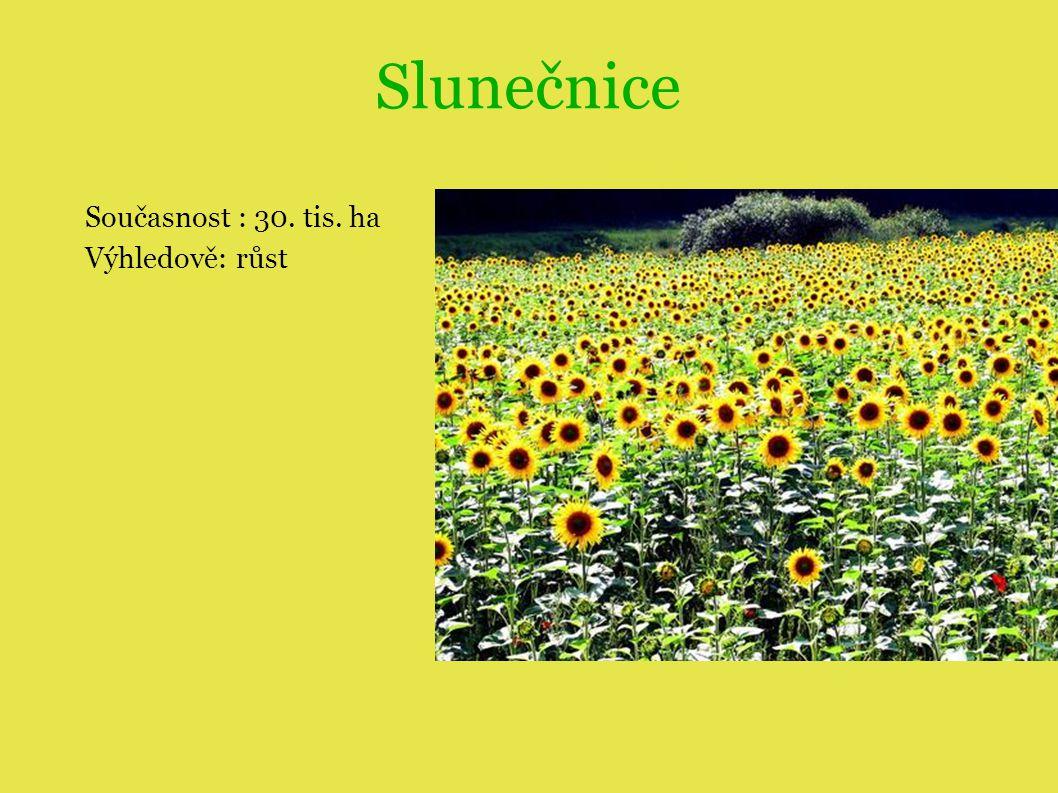 Slunečnice Současnost : 30. tis. ha Výhledově: růst