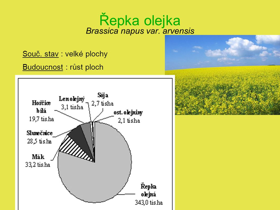 Řepka olejka Brassica napus var. arvensis Souč. stav : velké plochy Budoucnost : růst ploch