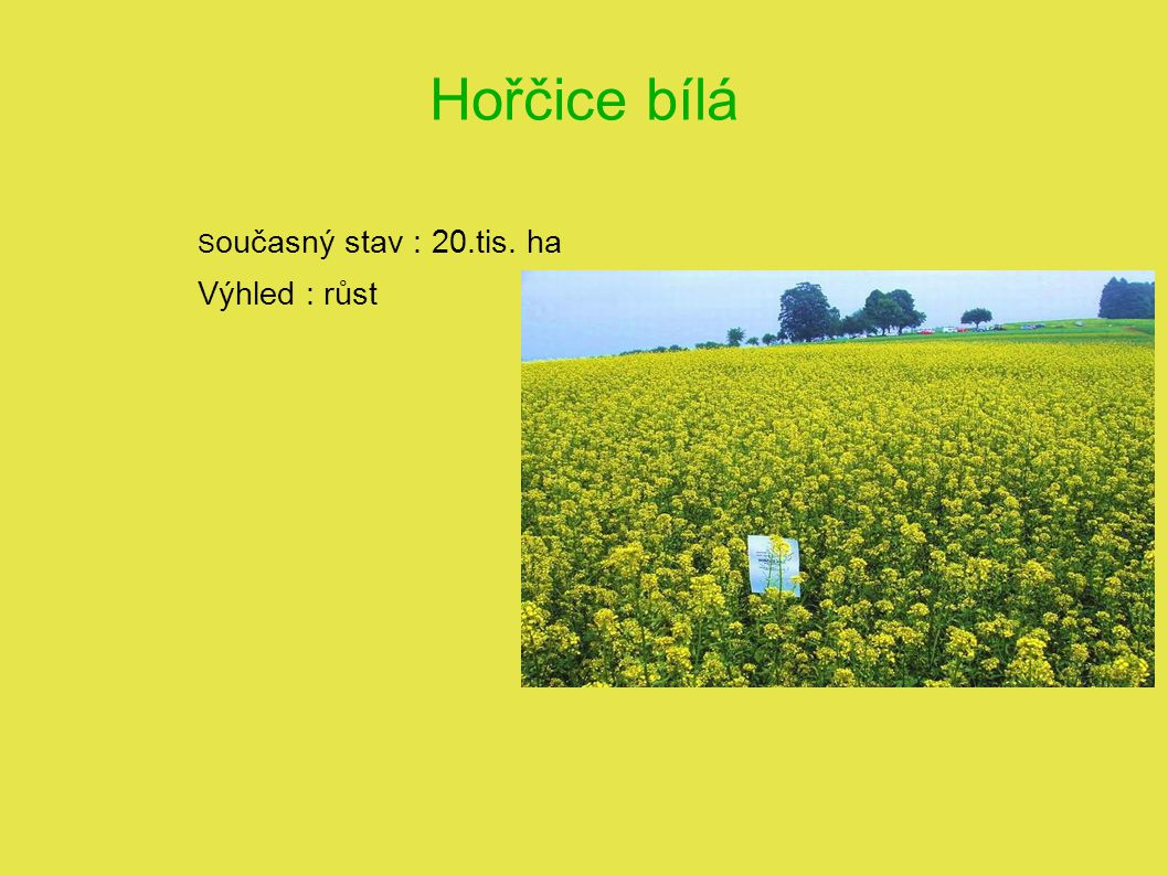 Hořčice bílá S oučasný stav : 20.tis. ha Výhled : růst