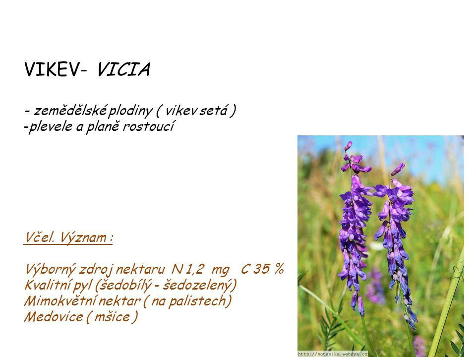 VIKEV- VICIA - zemědělské plodiny ( vikev setá ) -plevele a planě rostoucí Včel. Význam : Výborný zdroj nektaru N 1,2 mg C 35 % Kvalitní pyl (šedobílý