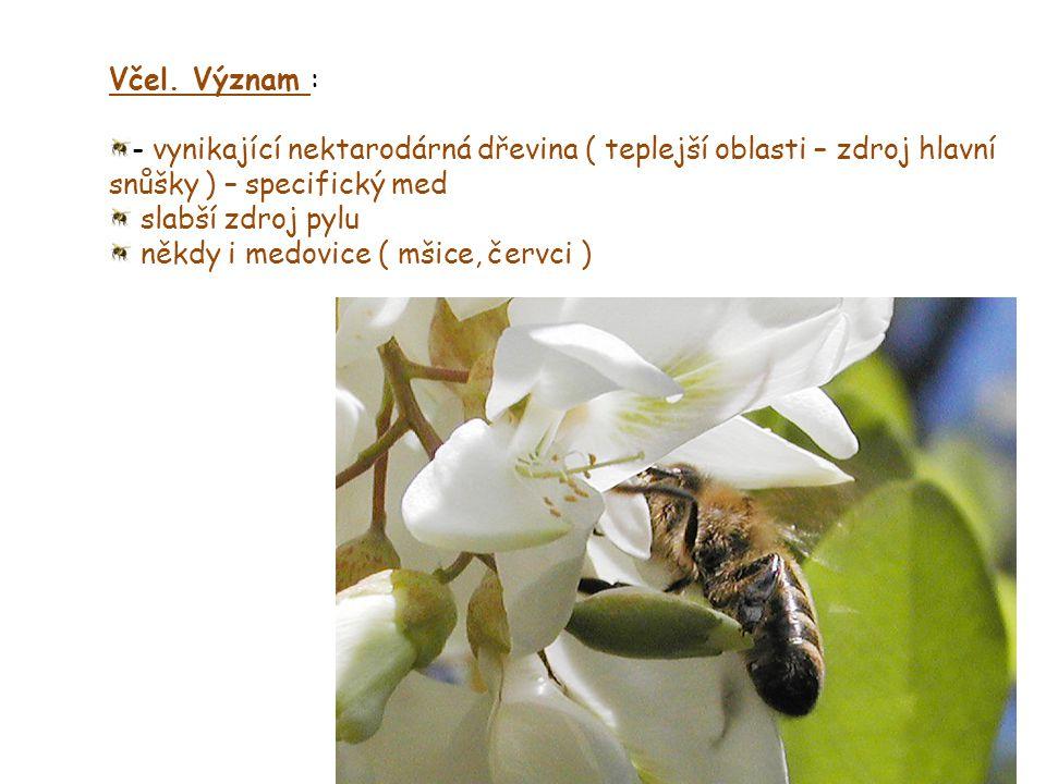 Včel. Význam : - vynikající nektarodárná dřevina ( teplejší oblasti – zdroj hlavní snůšky ) – specifický med slabší zdroj pylu někdy i medovice ( mšic