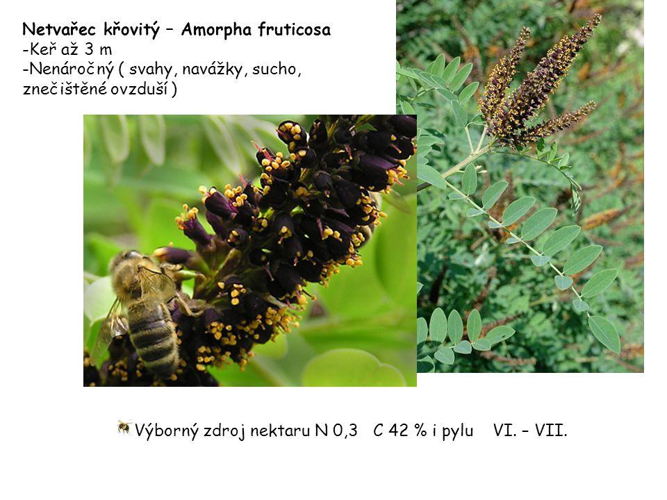 Netvařec křovitý – Amorpha fruticosa -Keř až 3 m -Nenáročný ( svahy, navážky, sucho, znečištěné ovzduší ) Výborný zdroj nektaru N 0,3 C 42 % i pylu VI