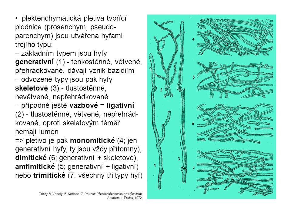 plektenchymatická pletiva tvořící plodnice (prosenchym, pseudo- parenchym) jsou utvářena hyfami trojího typu: – základním typem jsou hyfy generativní
