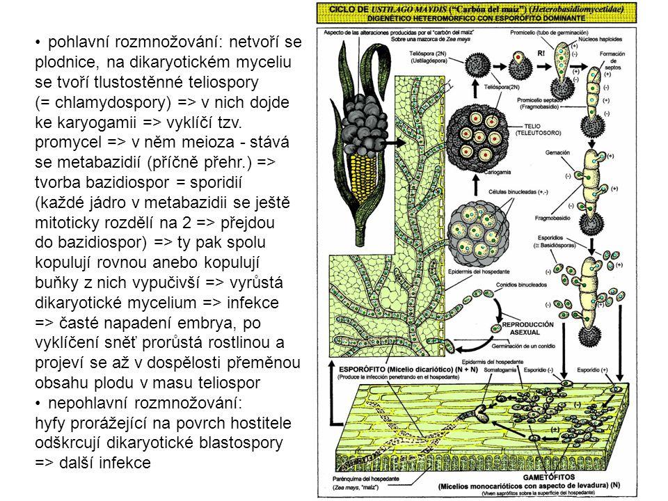 pohlavní rozmnožování: netvoří se plodnice, na dikaryotickém myceliu se tvoří tlustostěnné teliospory (= chlamydospory) => v nich dojde ke karyogamii