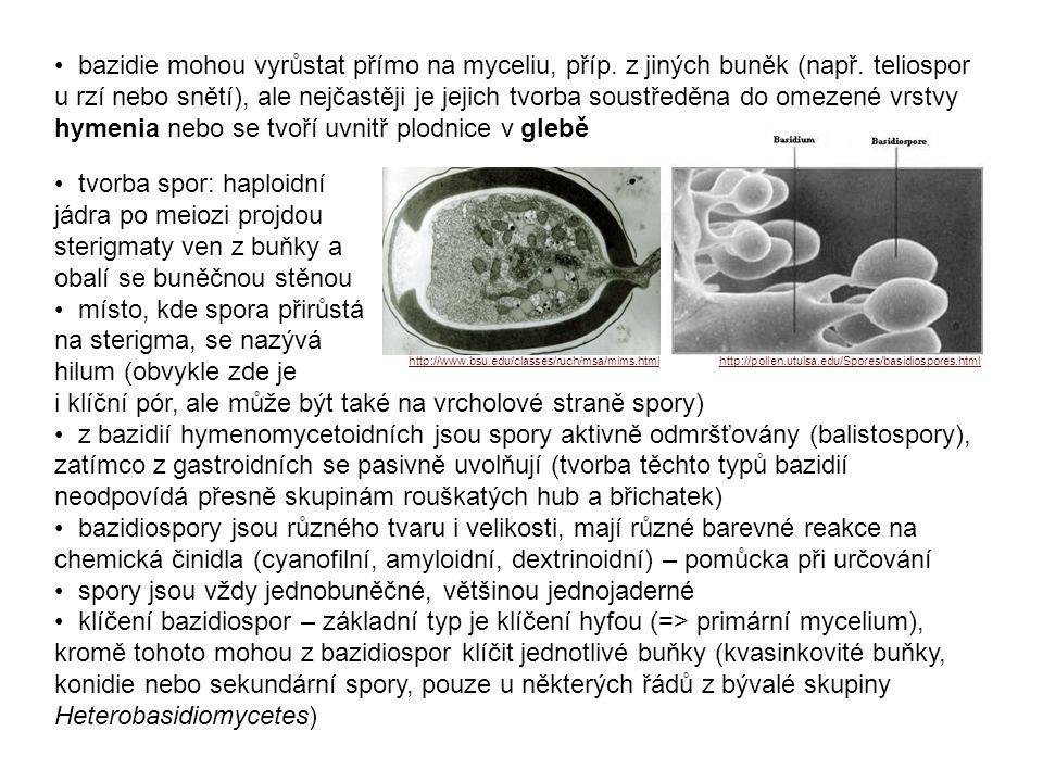 bazidie mohou vyrůstat přímo na myceliu, příp.z jiných buněk (např.