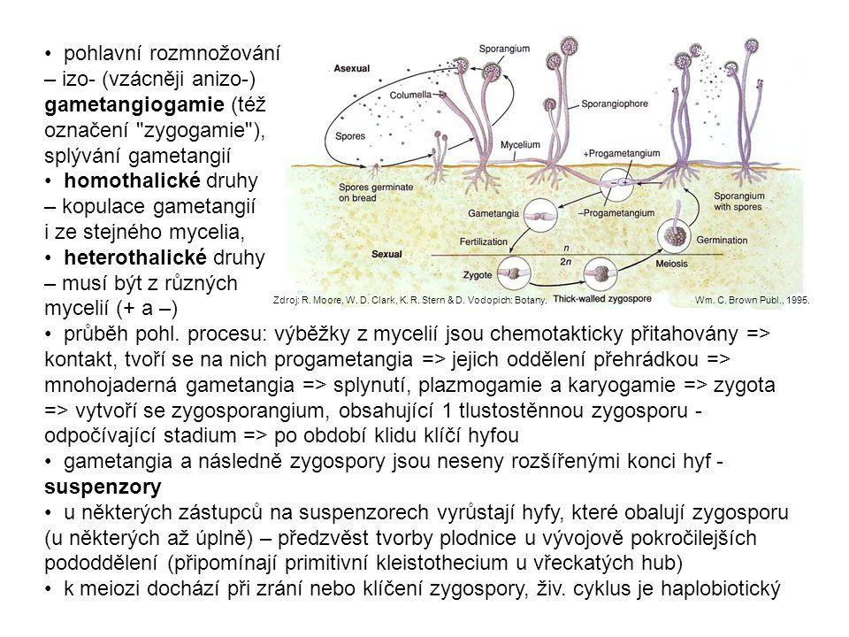 pohlavní rozmnožování – izo- (vzácněji anizo-) gametangiogamie (též označení