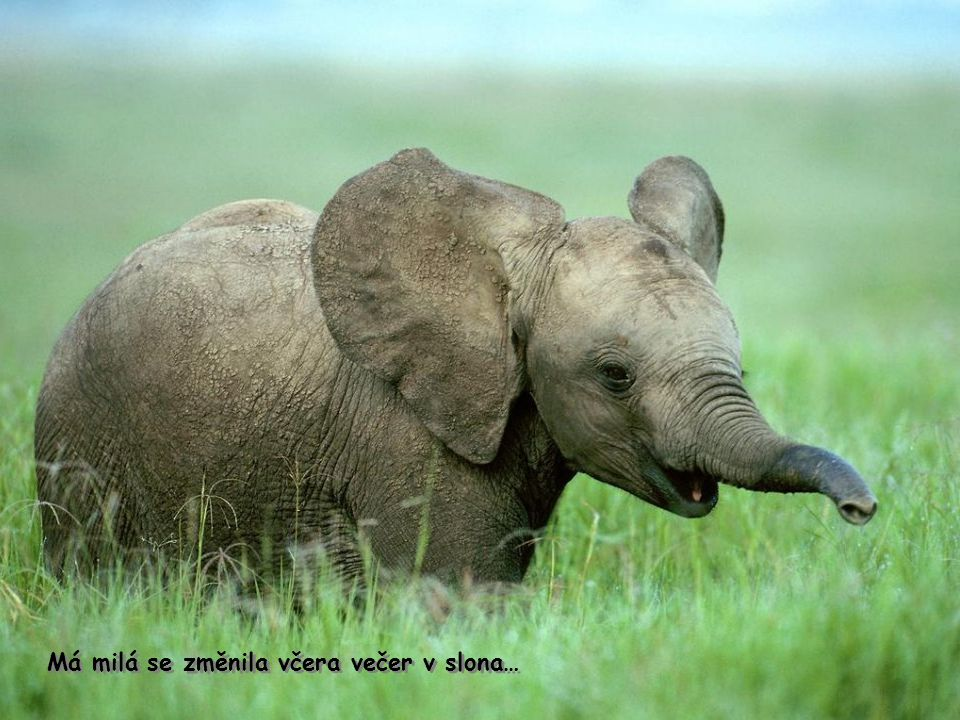 Má Milá se změnilaVčera večer v slona Má milá se změnila včera večer v slona…