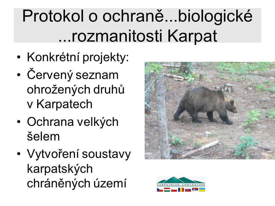 Protokol o ochraně...biologické...rozmanitosti Karpat Konkrétní projekty: Červený seznam ohrožených druhů v Karpatech Ochrana velkých šelem Vytvoření soustavy karpatských chráněných území