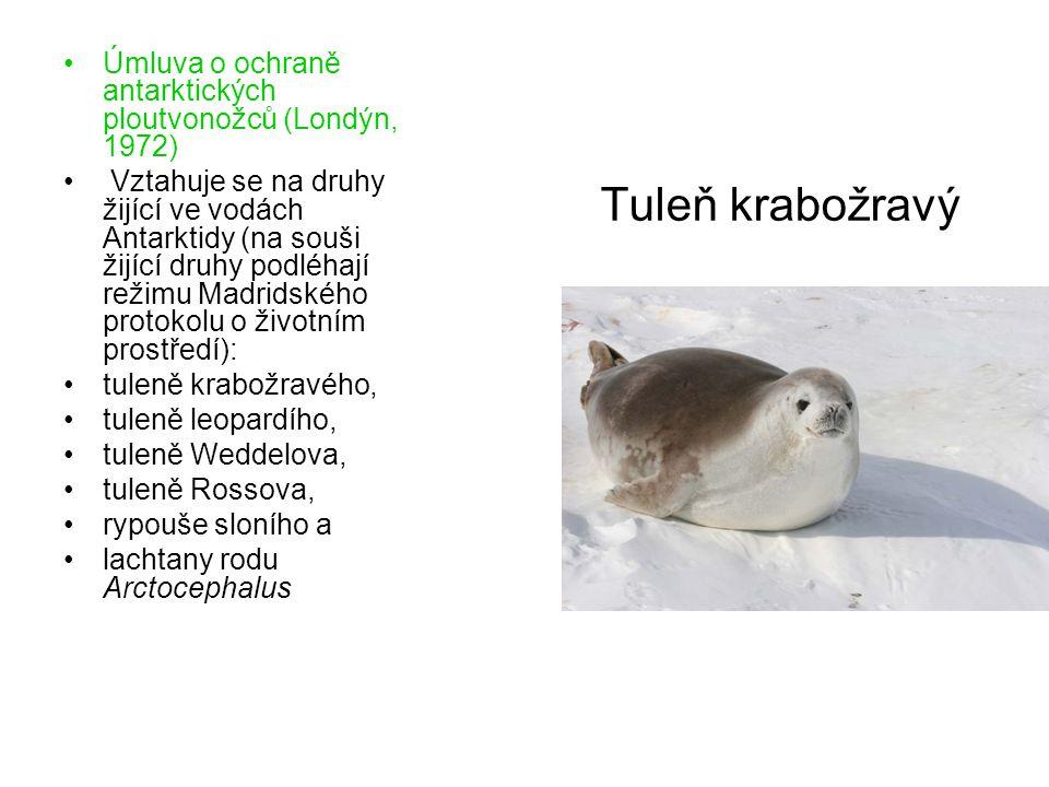 Tuleň krabožravý Úmluva o ochraně antarktických ploutvonožců (Londýn, 1972) Vztahuje se na druhy žijící ve vodách Antarktidy (na souši žijící druhy podléhají režimu Madridského protokolu o životním prostředí): tuleně krabožravého, tuleně leopardího, tuleně Weddelova, tuleně Rossova, rypouše sloního a lachtany rodu Arctocephalus