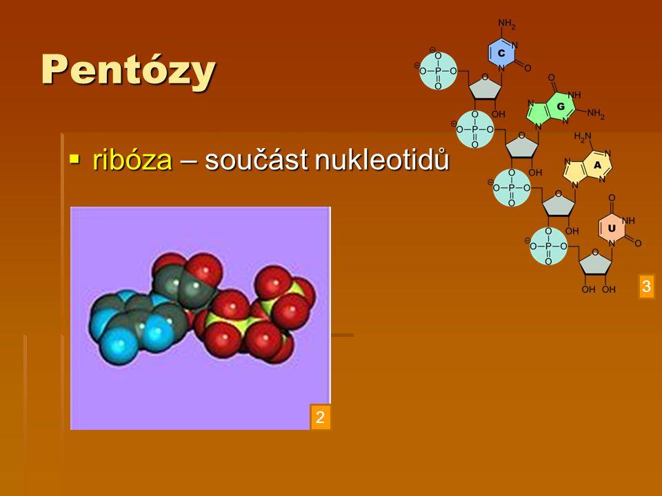 Pentózy  ribóza – součást nukleotidů 2 3