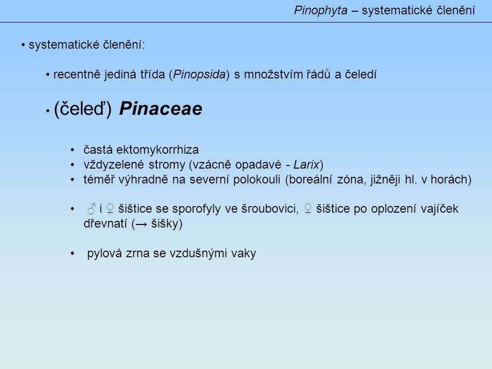 Pinophyta – Pinaceae (podčeleď) Abietoideae jehlice vyrůstají jednotlivě na makroblastech rod: Abies (40 – 50) nesrůstá semenná a podpůrná šupina šišky dozrávají v prvním roce, rozpadavé, rostou vzhůru Abies alba – jehlice krátké, 2řadě uspořádané, evropský endemit A.
