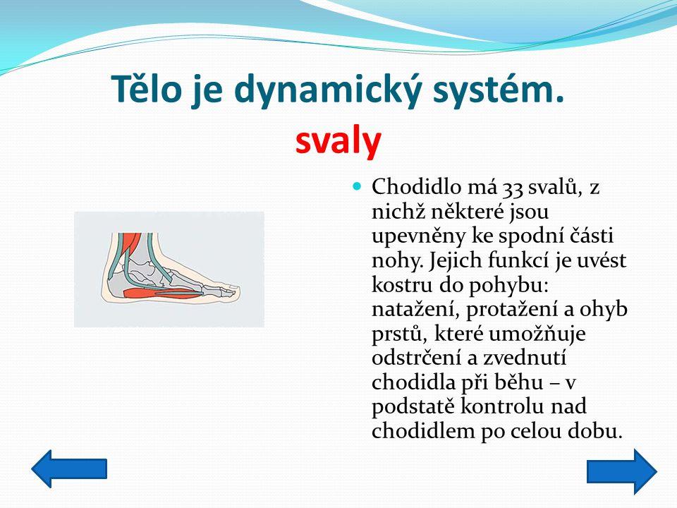 Tělo je dynamický systém. svaly Chodidlo má 33 svalů, z nichž některé jsou upevněny ke spodní části nohy. Jejich funkcí je uvést kostru do pohybu: nat