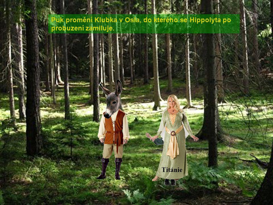 Puk promění Klubka v Osla, do kterého se Hippolyta po probuzení zamiluje. Puk Titánie