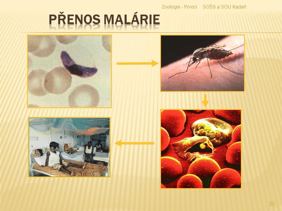  Vyvolává u člověka malárii.  Šíří se v tropech a subtropech.  Napadá červené krvinky.  Proces rozpadu erytrocytů je provázen horečkami.  Komár a