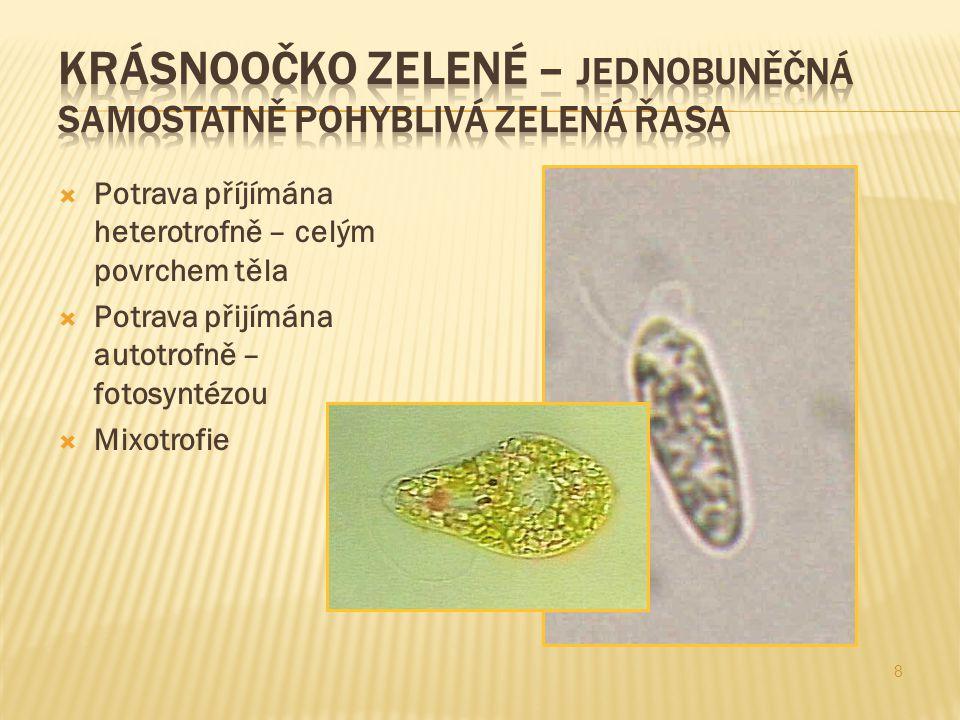  Potrava příjímána heterotrofně – celým povrchem těla  Potrava přijímána autotrofně – fotosyntézou  Mixotrofie 8