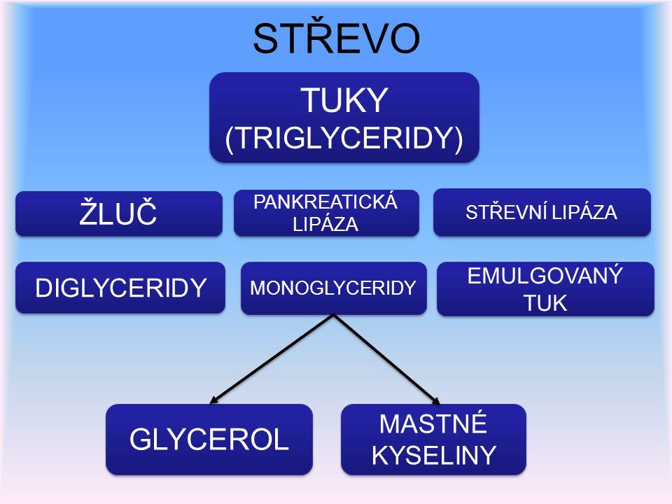 STŘEVO TUKY (TRIGLYCERIDY) TUKY (TRIGLYCERIDY) ŽLUČ PANKREATICKÁ LIPÁZA STŘEVNÍ LIPÁZA DIGLYCERIDY GLYCEROL MONOGLYCERIDY MASTNÉ KYSELINY EMULGOVANÝ T