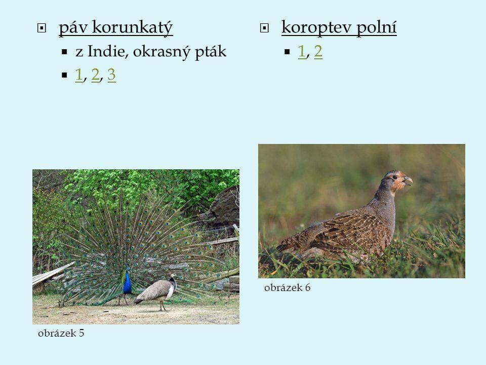  páv korunkatý  z Indie, okrasný pták  1, 2, 3 123  koroptev polní  1, 2 12 obrázek 5 obrázek 6