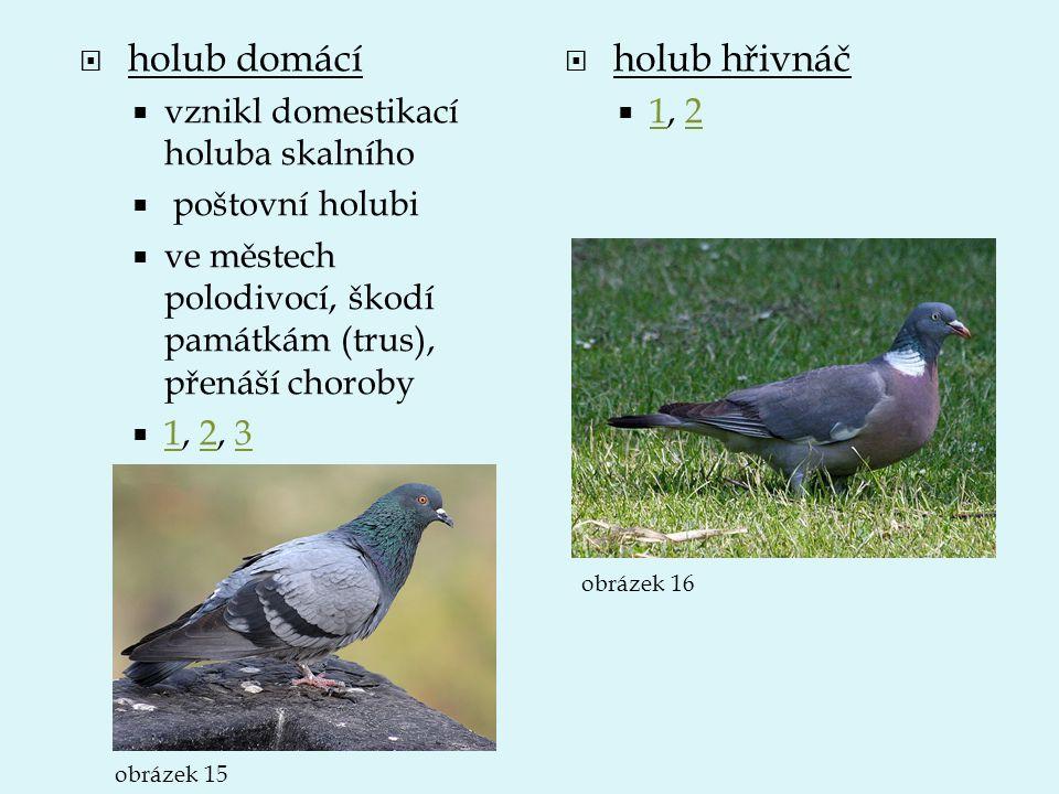  holub domácí  vznikl domestikací holuba skalního  poštovní holubi  ve městech polodivocí, škodí památkám (trus), přenáší choroby  1, 2, 3 123 