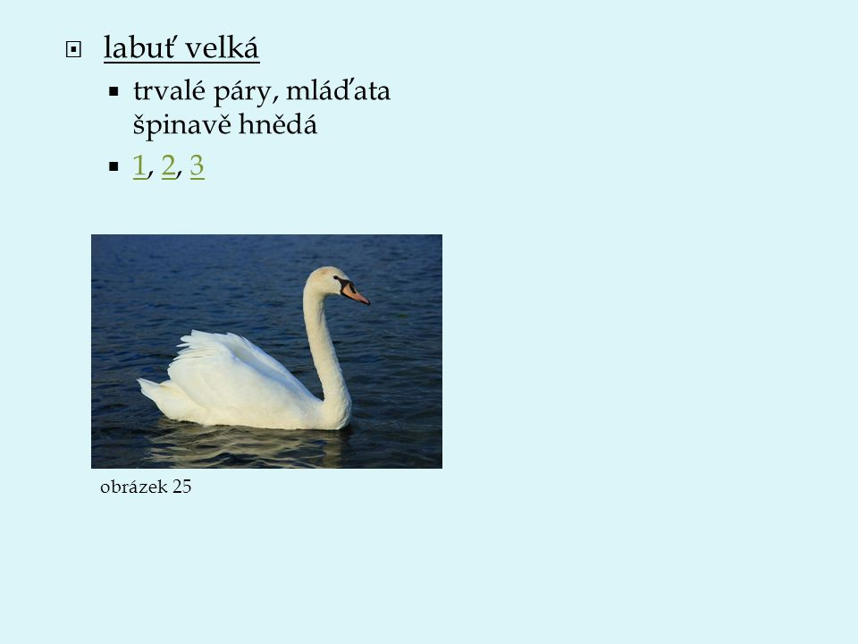  labuť velká  trvalé páry, mláďata špinavě hnědá  1, 2, 3 123 obrázek 25