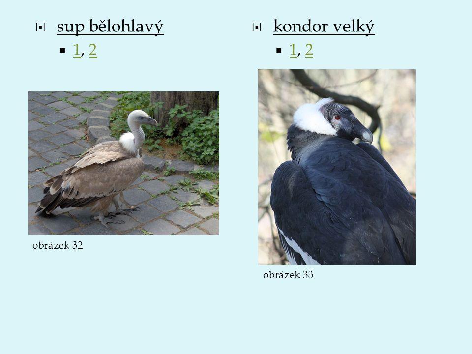  sup bělohlavý  1, 2 12  kondor velký  1, 2 12 obrázek 32 obrázek 33