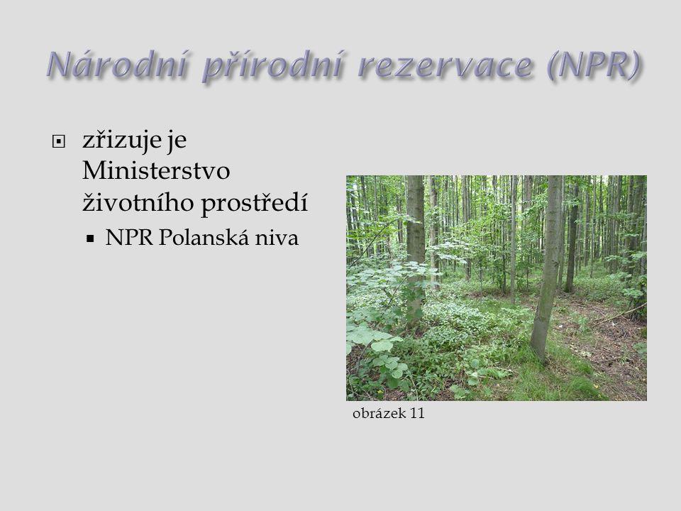  zřizuje je Ministerstvo životního prostředí  NPR Polanská niva obrázek 11