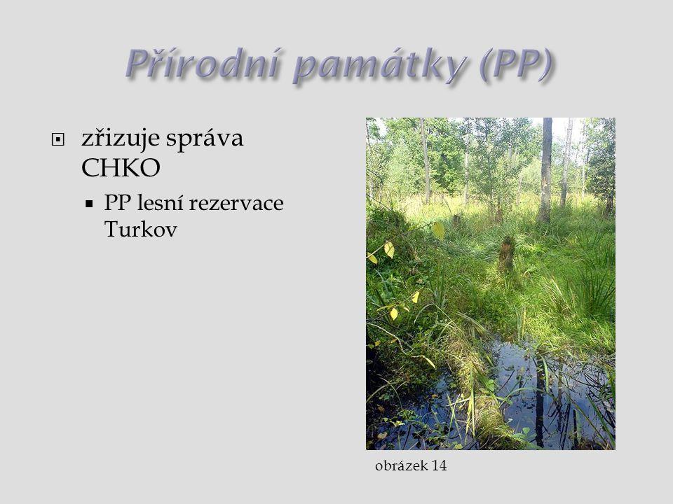  zřizuje správa CHKO  PP lesní rezervace Turkov obrázek 14