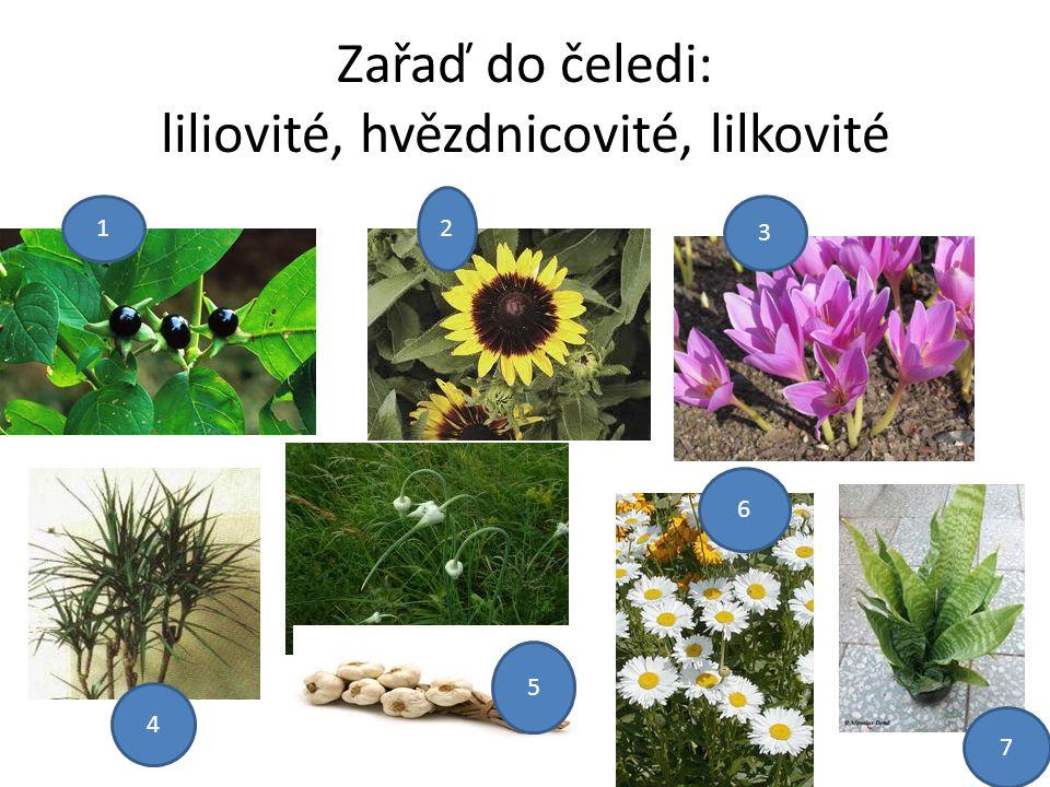 Zařaď do čeledi: liliovité, hvězdnicovité, lilkovité 1 2 3 4 5 6 7