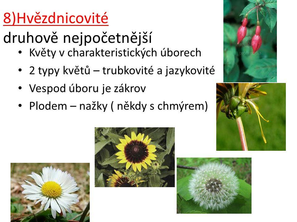 8)Hvězdnicovité druhově nejpočetnější Květy v charakteristických úborech 2 typy květů – trubkovité a jazykovité Vespod úboru je zákrov Plodem – nažky