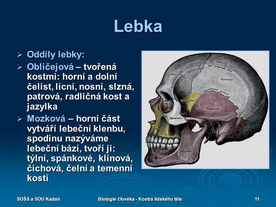 SOŠS a SOU KadaňBiologie člověka - Kostra lidského těla11 Lebka  Oddíly lebky:  Obličejová – tvořená kostmi: horní a dolní čelist, lícní, nosní, slz