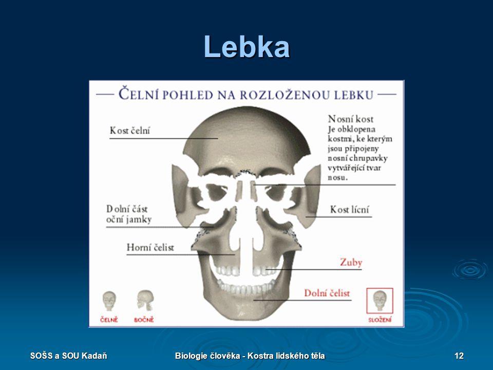 SOŠS a SOU KadaňBiologie člověka - Kostra lidského těla12 Lebka