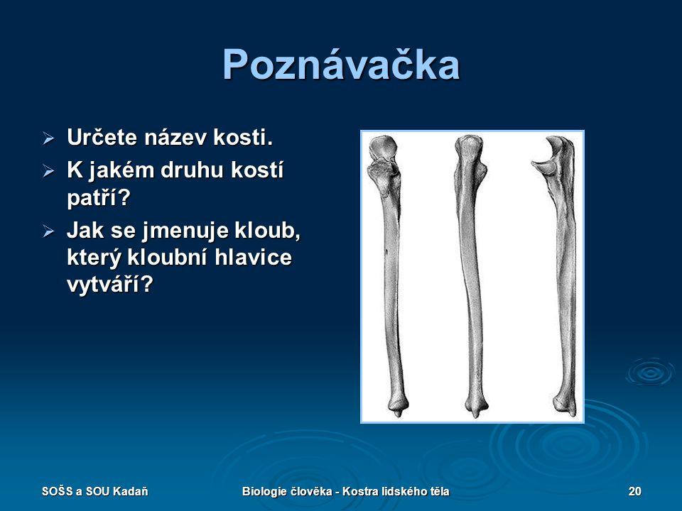 SOŠS a SOU KadaňBiologie člověka - Kostra lidského těla20 Poznávačka  Určete název kosti.  K jakém druhu kostí patří?  Jak se jmenuje kloub, který