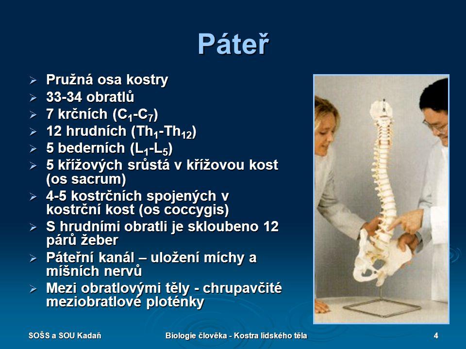 SOŠS a SOU KadaňBiologie člověka - Kostra lidského těla15 Pletenec a kostra dolní končetiny  Kostra dolní končetiny je ke kostře trupu připojena pánevním pletencem  Pánevní pletenec – pánevní kost (vznik spojením původně samostatných kostí: kyčelní, stydké a sedací) a křížová kost  Kostra dolní končetiny – stehenní kost, holenní a lýtková kost (kosti bérce), zánártní kosti (7 kostí, největší patní), nártní kosti (5) a články prstů  V kolenní krajině – čéška (patella) vsunuta do šlachy čtyřhlavého stehenního svalu